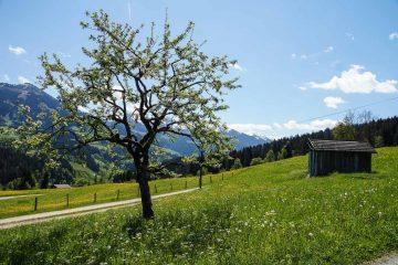 Wanderung Lendwirt – Kienzlinger Alm – Käsealm Straubing (4,5 h)